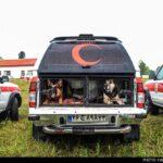 dog training-4