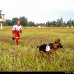 dog training-9