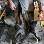old man and cats_145