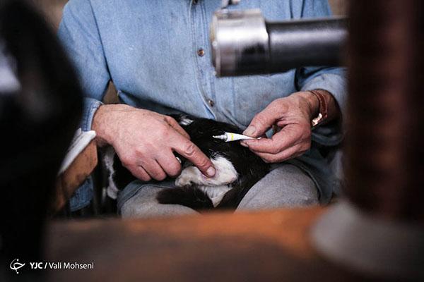 Bonds Shoe Repair Lodi