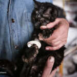 old man and cats_389