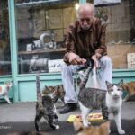 old man and cats_434