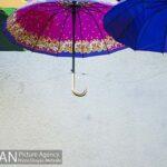 umbrellas384