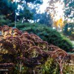 Botanical Garden (12)