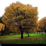 Fall (7)
