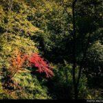 Kaboud-Val Waterfall1448435653186_isna-3