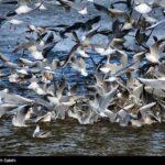 Migratory birds0