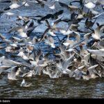 Migratory birds7_260