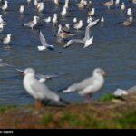 Migratory birds_225