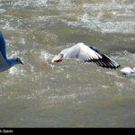 Migratory birds_244
