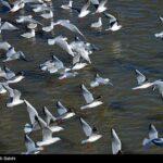 Migratory birds_376