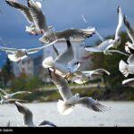 Migratory birds_403