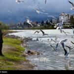 Migratory birds_452