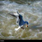 Migratory birds_456