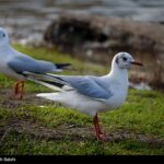 Migratory birds_510