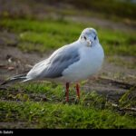 Migratory birds_600