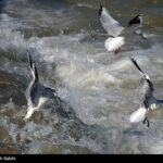 Migratory birds_749