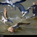 Migratory birds_756