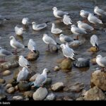 Migratory birds_827