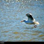 Migratory birds_842