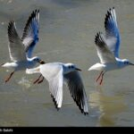 Migratory birds_899