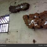 Biennale in Venice872