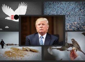 Birds-trump