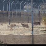 Cheetah Day-4673801
