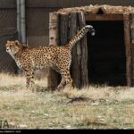 Cheetah Day-4673802