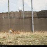Cheetah Day-4673803