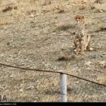 Cheetah Day-4673804
