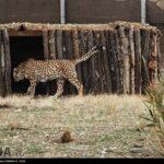 Cheetah Day-4673806