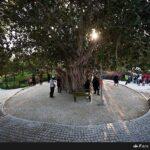 Hahrireh Town17