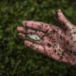 Medicinal leeches-6