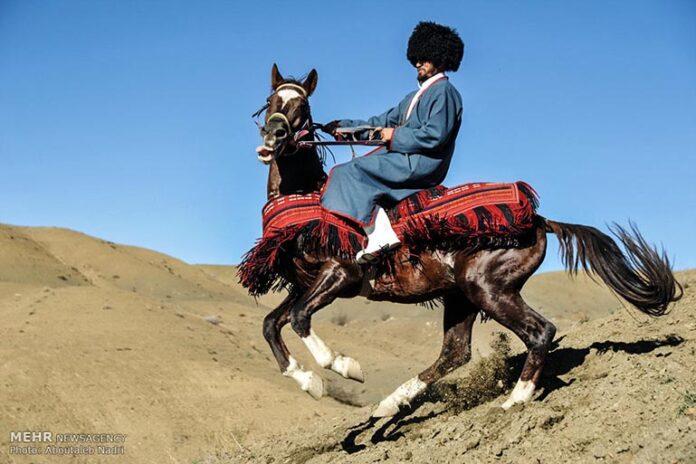 horse 00