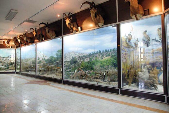 Qeshm Geo-park Museum; Prominent Wildlife Museum in Iran