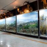 Qeshm Island's Geo-park Museum, Prominent One in Iran