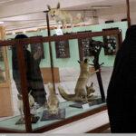 Qeshm Island Geo-park Museum