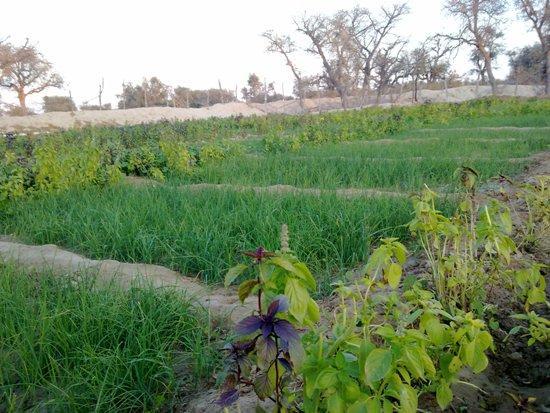 Tourian Village, Green Place in Iran's Qeshm Island