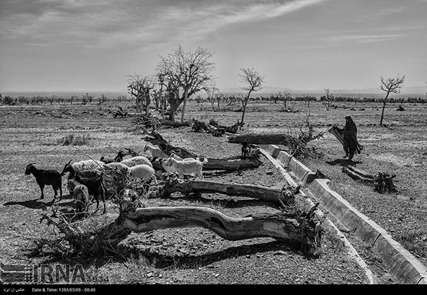Drought-5009567