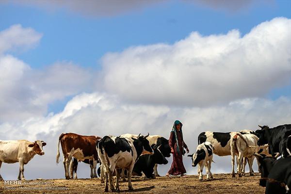 Golestan province_9610