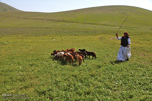 Nomads of Arasbaran -104-