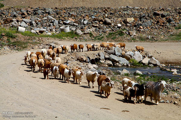Nomads of Arasbaran -16-