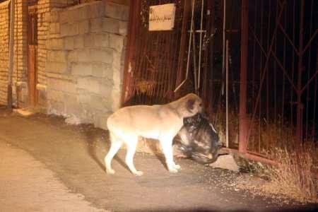 Environment friendly dog