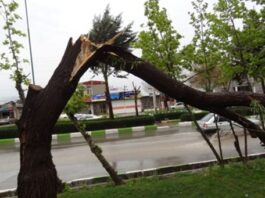 Iranian-Made App Predicts Tree Damage