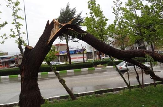 Iranian-Made App Predicts Tree Damage