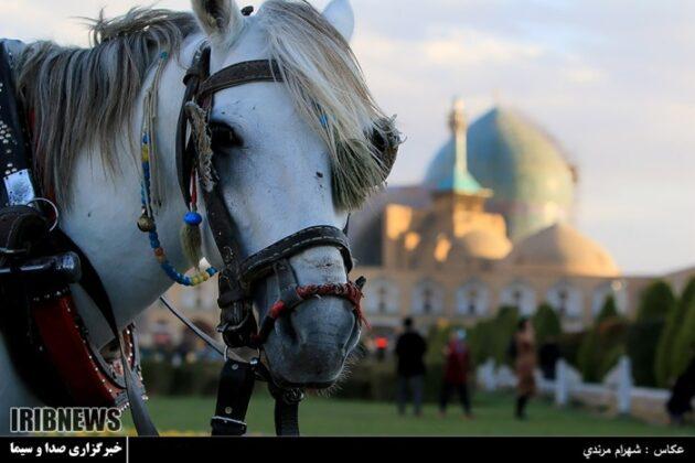 Horse Carriage, Isfahan, Iran