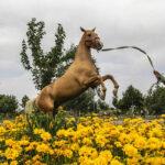 Turkmen-Horse-
