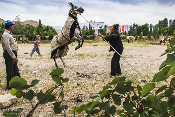 Turkmen-Horse-11