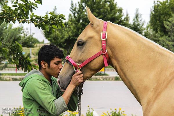 Turkmen-Horse-16